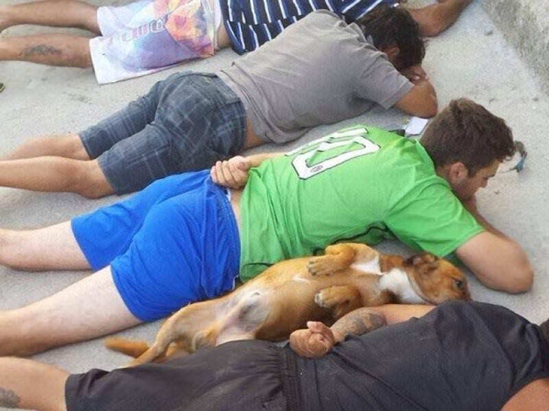 Dog Brazil