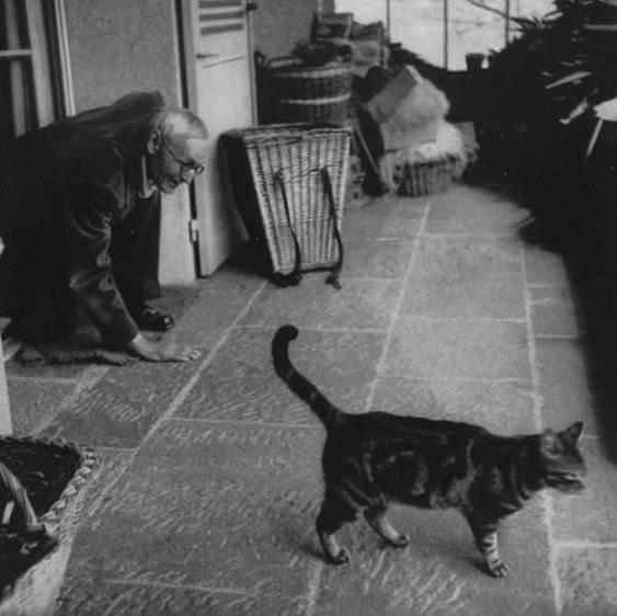 Hermann Hesse cat