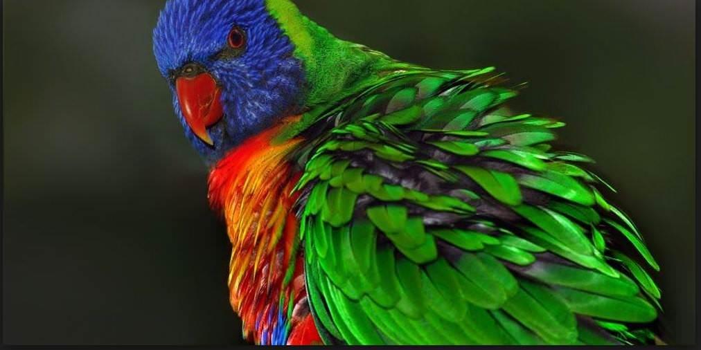 Καλό μουνί μεγάλο πουλί